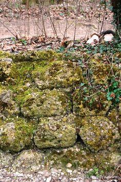 #Mauer #Moos #Geschichte
