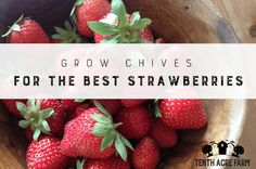 Strawberries are a favorite in the garden. Here's how to grow your best strawberries using herbs like chives to fertilize and deter pests.