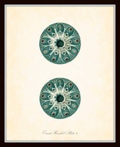 Vintage Ernst Haeckel Sea Life Series Plate 4 - Natural History Art Print 8 x 10 - Sea Plants - Fantasy Sea Life. $10.00, via Etsy.