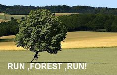 Run Forest!