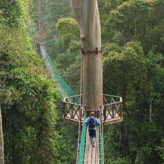cool tree bridge