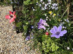 For professional and friendly gardening service in Vienna/Wien, InterWien recommends Hortus Naturalis Gartenpflege DI Beck Vienna, Shops, Gardening, World, Plants, Yard Maintenance, Tents, Lawn And Garden, Retail