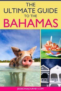 Looking to enjoy some Bahamas travel? This guide shares the best things to do in the Bahamas, tips included. Get ready for one of the best Caribbean vacations possible! // #Bahamas #Travel #Caribbean #Vacation #TravelBahamas