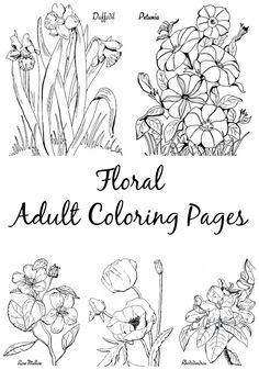 7 Floral Adult Coloring Pages - The Graphics Fairy. Such pretty Flower Images to color in!