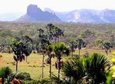 O Paraiso - Cactos e Brom�lias do Brasil
