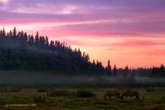 Bragg Creek Alberta Horses of Courses..been there :)