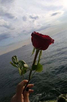 roses by the ocean Aesthetic Roses, Red Aesthetic, Aesthetic Photo, Aesthetic Pictures, Tumblr Wallpaper, Flower Wallpaper, Wallpaper Backgrounds, The Ocean, Aesthetic Iphone Wallpaper