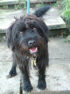 This dog could be Fay's brother, but he's in England.  Patterdale Terrier Information | Scruff – 12 month old male Patterdale Terrier Cross dog for adoption