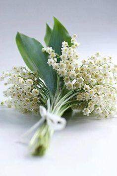 white coral bells upon a slender stalk ...