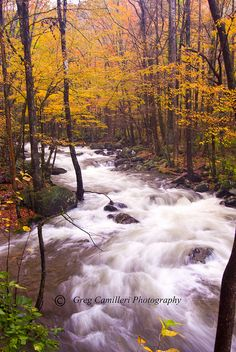 The river runs through it. by Iminfocus, via Flickr