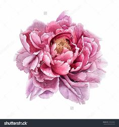 Flowerspeonywatercolorthis Image Can Be Used Postcards Stock Illustration 376922884 Peony Flower, Flower Art, Watercolor Flowers, Watercolor Art, Purple Flower Tattoos, Color Art Lessons, Peony Colors, Flower Drawing Tutorials, Paper Quilling Flowers