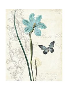 Botanical (Decorative Art) Poster Art at AllPosters.com
