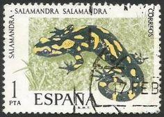 La salamandra común (Salamandra salamandra) es una especie de anfibio urodelo de la familia Salamandridae. Es el más común de los urodelos en Europa. De hábitos terrestres, únicamente entra en el agua para parir, y muchas sub especies lo hacen en tierra. Es un urodelo inconfundible, de fondo negro y manchas variadas amarillas muy intensas que pueden llegar a cubrir la casi totalidad del cuerpo.