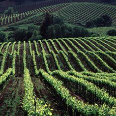Sonoma, CA wine country.