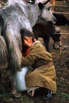Asia | Portrait of a girl milking a yak, Tiber, China | © Kazuyoshi Nomachi