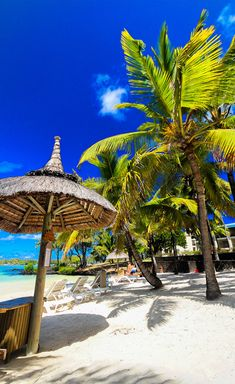 Mauritius Island, Beach Bars, Summer Photos, Beach Fun, Best Hotels, Summer Time, Seaside, Beaches, Around The Worlds