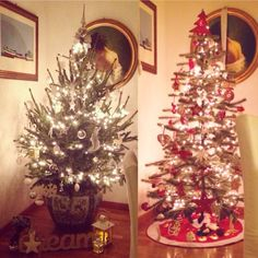 Christmas tree: real vs artificial. White vs red.