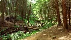 Small Woodland Bridge