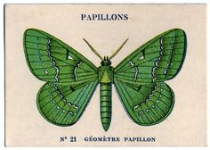 Click on Image to EnlargeThis is a delightful little card! The card shows a bright Green Butterfly or Papillons in French. Nice for your Collage or Mixed Media pieces!