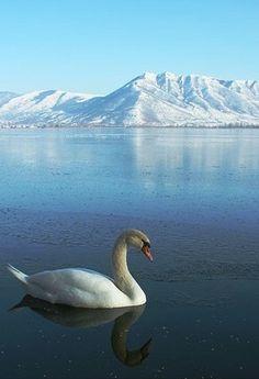 Kastoria, Greece / by yurikim Travel Honeymoon Backpack Backpacking Vacation Beautiful Birds, Beautiful Places, Beautiful Pictures, Beautiful Swan, Myconos, Places In Greece, Wild Nature, Sea Birds, My Land