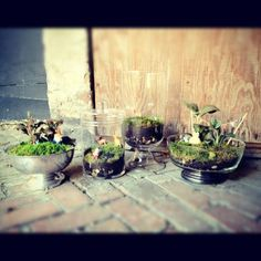 Terrariums by #SCAD artist Lindsay Williams!! You just got to have one of these!!