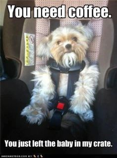 car seats, funny dogs, funny animal pictures, funny pictures, funni