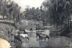 Umsindusi River, Pietermaritzburg, Natal