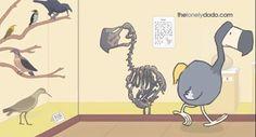 dodo club durrell - Google Search