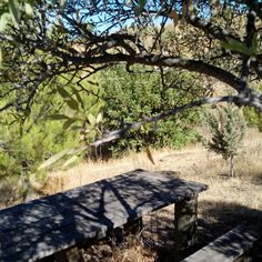 Mesa de madera a la sombra de un almendro. Wooden table in the shade of an almond tree. #nature #naturaleza #almendro #almond #senderismo #trekking