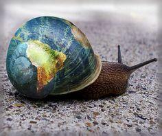 S for Snail: .a globe snail. World Globe Map, Globe Art, World Globes, Map Globe, Third Culture Kid, We Are The World, Photoshop, Photo Manipulation, Daffodils