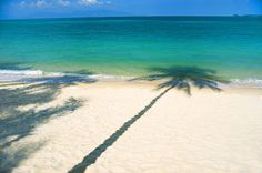 #koh_samui #palm_tree on the #beach