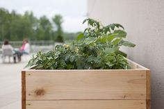 Tips for Starting a Workplace Garden >> http://blog.diynetwork.com/maderemade/2014/05/16/growing-at-work-how-to-start-an-office-garden/?soc=pinterest