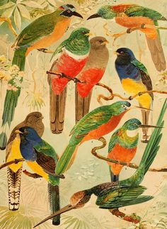 Album de Aves Amazonicas   Biodiversity Heritage Library inspiration - colours