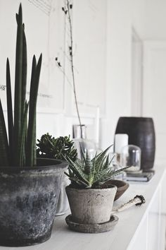 """For those who lack in """"green fingers"""", the cactus interior decor is the ultimate solution for you. The cacti that change the look of your room in a moment. Cacti And Succulents, Potted Plants, Indoor Plants, Plant Pots, Indoor Gardening, Succulent Planters, Cactus E Suculentas, Cactus Plante, Decoration Plante"""