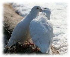 White kiss ;-) ♥