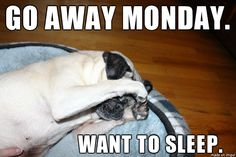 Monday morning after Daylight Savings Time change is hitting hard. Check out more pug pics at www.aboutpug.com