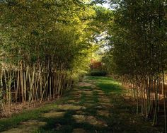 asian landscape modern style bamboo trees stone slabs path