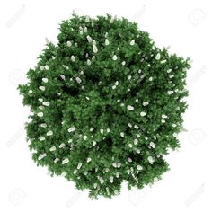 shrub top view - Google Search