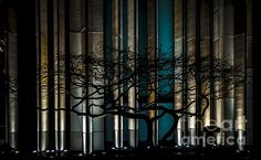 Check out this photograph on james-aiken.pixels.com! http://james-aiken.pixels.com/featured/urban-tree-silhouette-james-aiken.html #trees #silhouette #urbanart #artforsale @jamesaiken
