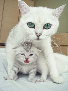 mama and baby kitten