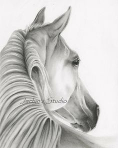 "Charcoal Horse Drawing Giclee Print - 8""x10"", Horse Art, Horse Print, Horse Sketch, Charcoal Drawing, Charcoal Art, Equine Art"