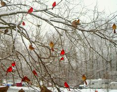 image of cardinals with text of cardinals being passed loved ones visiting - Google Search