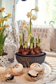 olohuone,pääsiäinen,perunanarsissi