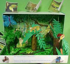 geography model - rainforest