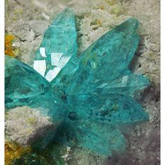Kröhnkite ~ Morro Mejillones, Mejillones, Antofagasta Region, Chile