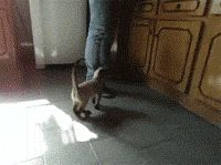 Her favorite time of the day (GIF) awww
