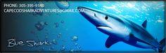 Cape Cod Shark Adventures