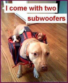 "The mommy dog: ""I come with two subwoofers"""
