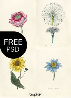 Download free PSDs of Biodiversity Heritage Library: Botanical images at rawpixel.com