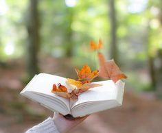 Ingvild photo, Read. Container, Cool Stuff, Reading, Cards, Autumn, Reading Books